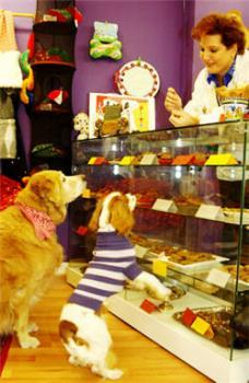 gastronomie-pour-chiens.jpg